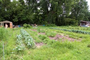 Augie Acres is the student gardening organization located up the hill from Carver. Photo by LuAnna Gerdemann.