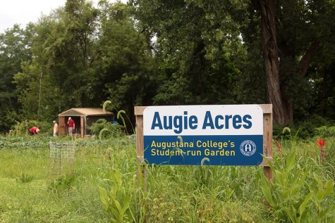 Augie Acres sells to the Davenport Freight House Farmers Market on every Saturday. Photo by LuAnna Gerdemann.